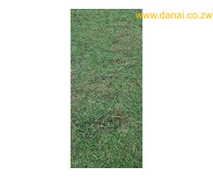 Instant  lawn, flowers  and landscaping services